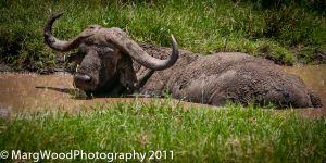 AFRICA-32.jpg
