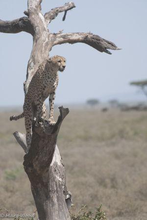 Serengeti-2734.jpg