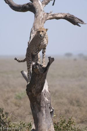 Serengeti-2867-Edit-c95.jpg