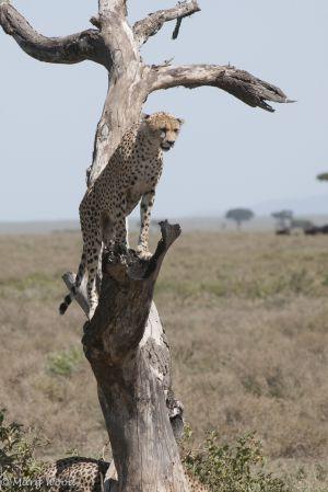 Serengeti-3054.jpg