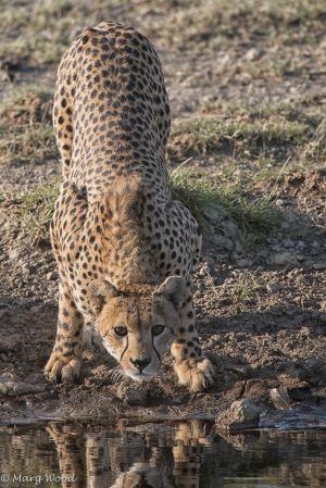 Serengeti-4055-Edit-2-2.jpg
