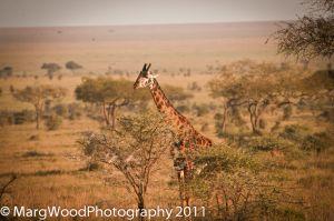 africa-17.jpg