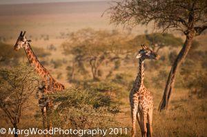 africa-2-5.jpg