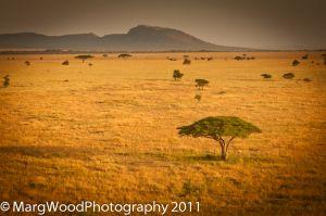 c61-africa-3.jpg