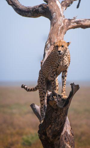 c88-Serengeti-2867-Edit.jpg