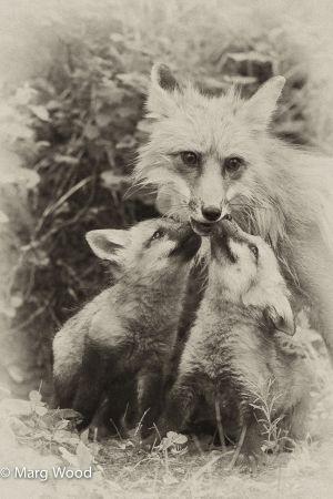 badger-15.jpg