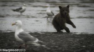 Alaska-37.jpg
