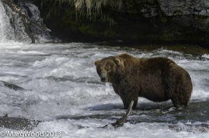 Alaska-55.jpg