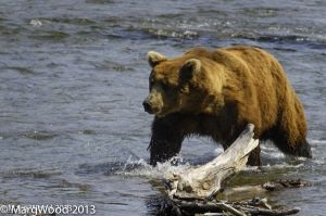 Alaska-57.jpg